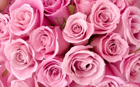 fleur-rose-1280x800
