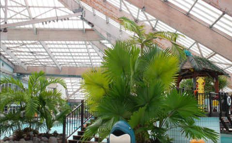 Aquaboulevard-palmiers-520-321